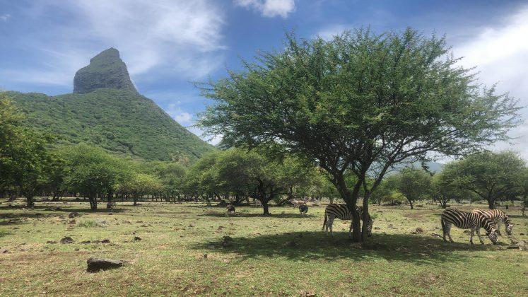 Casela Nature Parks safari